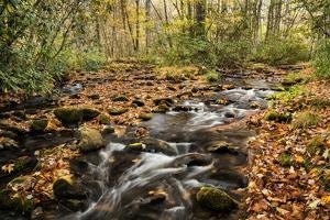 USA, North Carolina, Great Smoky Mountains National Park. Cataloochee Creek in Cataloochee Cove by Ann Collins