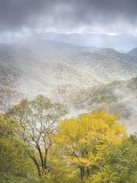 USA, North Carolina, Great Smoky Mountains National Park. Fog and autumn color from Deep Creek Over by Ann Collins