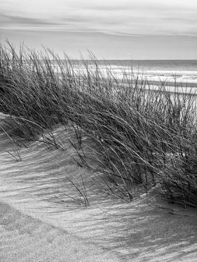 USA, Oregon, Manzanita. Nehalem Bay State Park, Dune grasses wave in the wind by Ann Collins