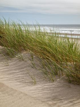 USA, Oregon. Manzanita, Nehalem Bay State Park, Dune grasses wave in the wind by Ann Collins