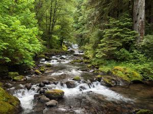 USA, Oregon, Siuslaw National Forest. Sweet Creek by Ann Collins