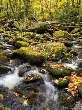 USA, Tennessee. Gatlinburg. Great Smoky Mountains National Park, Flowing creek along the Roaring Fo by Ann Collins