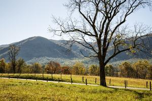 USA, Tennessee. Great Smoky Mountains National Park, Cades Cove Loop Road by Ann Collins