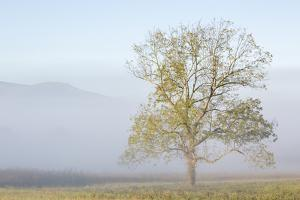 USA, Tennessee. Great Smoky Mountains National Park, Clearing fog in Cades Cove by Ann Collins