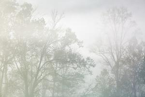 USA, Tennessee, Great Smoky Mountains National Park. Morning fog in Cades Cove by Ann Collins