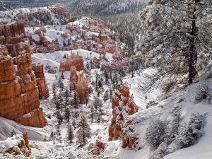 USA, Utah, Bryce Canyon National Park, Winter morning near Sunrise Point after fresh snowfall by Ann Collins