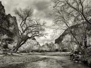 USA, Utah. Zion National Park, Virgin River and Cottonwoods in winter tinted monochrome by Ann Collins
