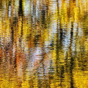 USA, Virginia, Blue Ridge Parkway. Abstract autumn reflections in Rakes Mill Pond by Ann Collins