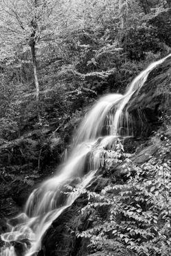 USA, Virginia, Blue Ridge Parkway. George Washington National Forest, Autumn at Crabtree Falls by Ann Collins