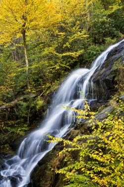 USA, Virginia, Blue Ridge Parkway. George Washington National Forest, Autumn color at Crabtree Fall by Ann Collins