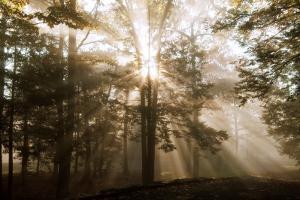 A New Day II by Ann Dahlgren