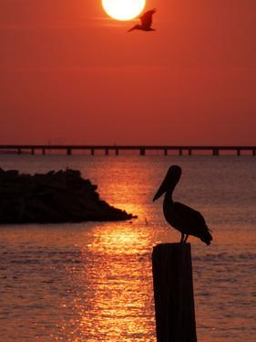 APTOPIX Pontchartrain Sunset by Ann Heisenfelt