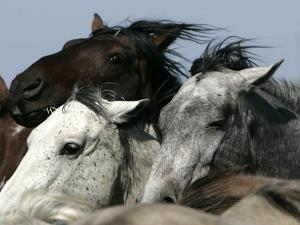 Mustangs Savior by Ann Heisenfelt