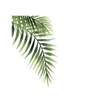 Palm by Ann Solo