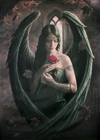 Ann Stokes Angel Rose