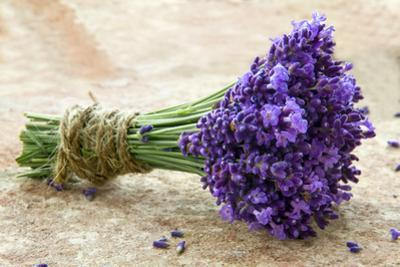 Bouquet of Fresh Lavenders by Anna-Mari West