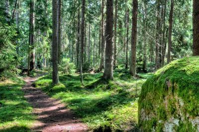 Green Forest Landscape in the Summer by Anna-Mari West