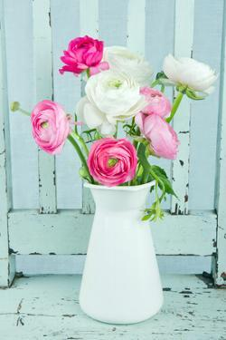White and Pink Ranunculus Flowers by Anna-Mari West