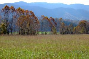 Autumn in Cades Cove, Smoky Mountains National Park, Tennessee, USA by Anna Miller