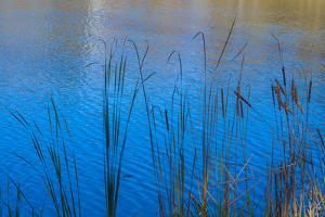 Cattails at edge of lake by Anna Miller