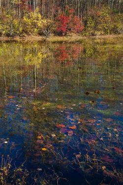 Fall foliage reflection in lake water by Anna Miller