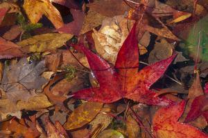Fall foliage by Anna Miller