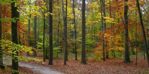 Fall in McCormics Creek State Park, Indiana, USA by Anna Miller