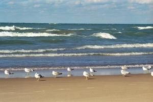 Flock of seaguls on the beaches of Lake Michigan, Indiana Dunes, Indiana, USA by Anna Miller