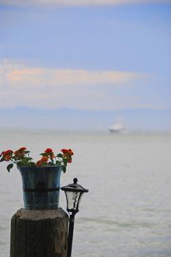 Flower Pot on Sausalito Pier, California by Anna Miller