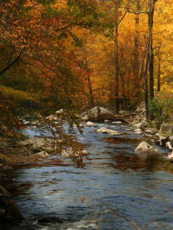 Golden foliage reflected in mountain creek, Smoky Mountain National Park, Tennessee, USA