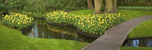 Narcissus Reflecting in Small Pond by Anna Miller