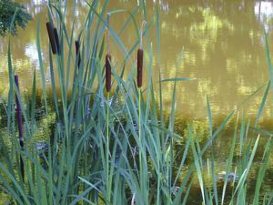 Pond by Anna Miller