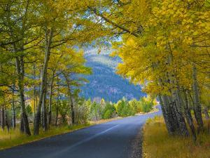 Road Thru Autumn Aspen Grove, Rocky Mountain National Park, Colorado,USA by Anna Miller