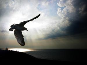 Seagul in flight over Lake Michigan beach, Indiana Dunes, Indiana, USA by Anna Miller