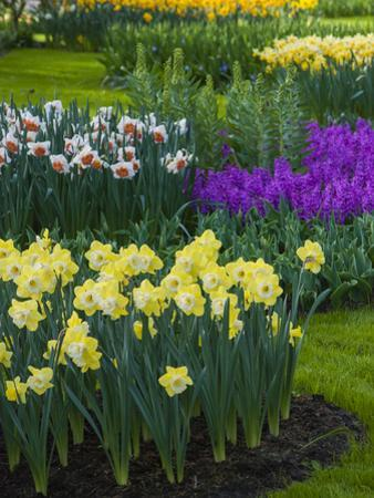 Spring flowerbeds with daffodils and hyacinth by Anna Miller