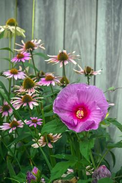 Summer garden flowers by Anna Miller