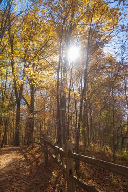 Sun shining through colorful Fall foliage by Anna Miller