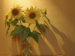 Sunflowers by Anna Miller