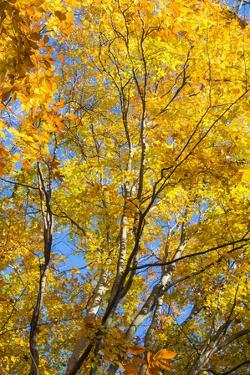Sunlight filtering through colorful Fall foliage by Anna Miller
