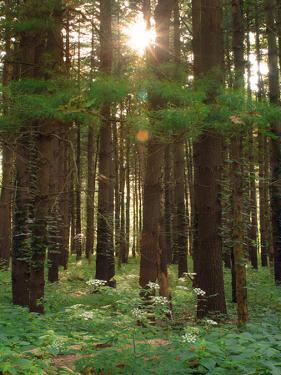 Treetrunks in Cataract Falls State Park forest, Indiana, USA by Anna Miller