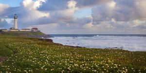 USA, California. Big Sur panorama with lighthouse and coastal plants. by Anna Miller