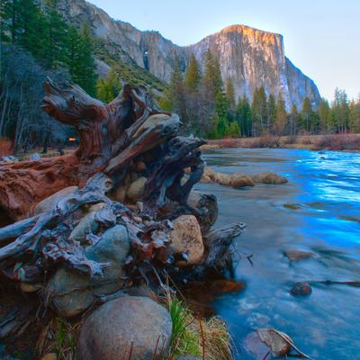 USA, California. Tree roots in Merced river in the Yosemite Valley.