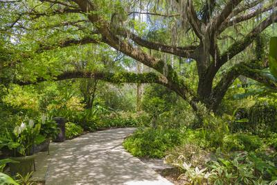USA, Florida. Tropical garden with palm trees and living oak covered in Spanish moss.