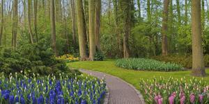 Woodland spring garden by Anna Miller