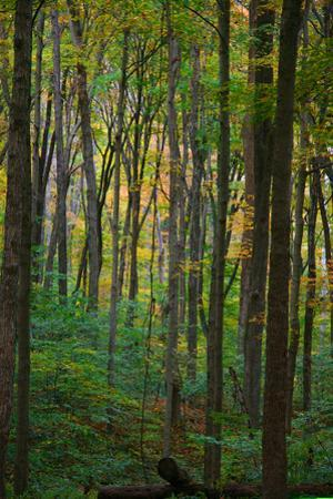 Yellowwood State Forest, Indiana, USA by Anna Miller