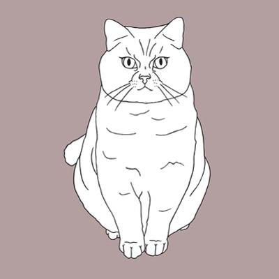 Fat Angry Cat
