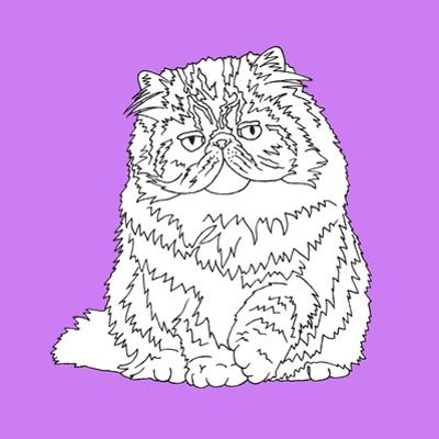 Fat Fluffy Cat