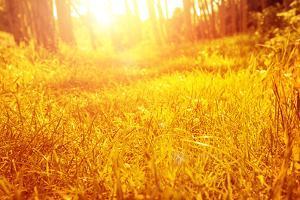 Dry Golden Grass in Autumnal Park by Anna Omelchenko