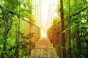 Picture of Arenal Hanging Bridges Ecological Reserve, Natural Rainforest Park by Anna Omelchenko