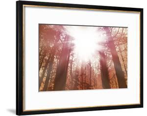 Sun Dance by Anna Polanski